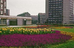 Dresden, Blumenrabatte